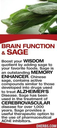Boost your wisdom quotient by adding sage to your favorite foods. Sage is an outstanding memory enhancer. Chinese sage, contains active compounds similar to those developed into drugs used to treat Alzheimer's Disease. Sage has been used in the treatment of cerebrovascular disease for over 1,000 years. Sage provides a useful therapeutic option to the use of pharmaceutical AChE inhibitors. #dherbs #healthtips by monimarin