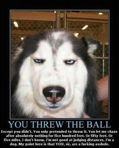 I wonder if this is what my dogs think about...