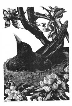"""Wood engraving by Clare Leighton, from the book """"Four Hedges,"""" the story of a year in the garden of Clare & her partner, Noel Brailsford, in the 1930s."""