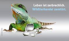 Kampagnenmotiv: Echse aus Porzellan mit abgebrochenem Fuß und dem Slogan: Leben ist zerbrechlich. Wildtierhandel zerstört