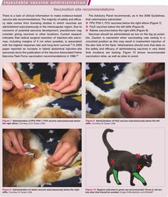 2013 AAFP Feline Vaccination Site Recommendations