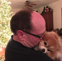 Daddy kisses! #pomeranian #lehighvalleyphotographer #pomeraniansofinstagram #christmastree