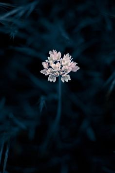Flores en la oscuridad