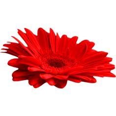 осенние цветы,красные,оранжевые,цветы осени,осенние цветы ❤ liked on Polyvore featuring flowers