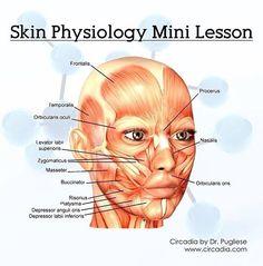 Physiology, Facial, Medical, Skin Care, Beauty, Deep, Cosmetics, Anatomy, Beleza