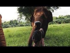 Szolgalelkű óriások - Egy dokumentumfilm az elefántok és turizmus kapcsolatáról Elephant, World, Youtube, Elephants, The World, Youtubers, Youtube Movies