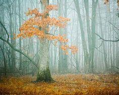 autumn decor . woodland art . photography . tree . by joystclaire