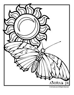 Butterfly Coloring Page with Sun