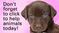 The Animal Rescue Site Home Page---Free Food for Animals in shelters when you click