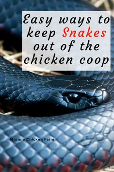 Easy ways to keep snakes out of the chicken coop! predator proof your chickens coop against snakes, from traps to deterrents and more. Here& how to prevent snakes from getting into your chicken coop and eating all the eggs! Easy Chicken Coop, Diy Chicken Coop Plans, Chicken Pen, Chicken Coup, Chicken Garden, Chicken Coop Designs, Backyard Chicken Coops, Building A Chicken Coop, Chicken Feeders