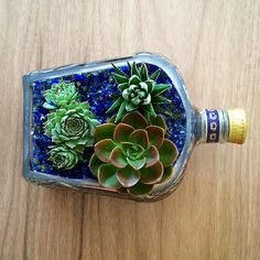 Crown Royal® LongCut Liquor Bottle Planter Pot This beautiful hand-cut planter pot is made from a recycled liquor bottle. Each bottle is cut, theedges are sandedto create a beautiful container for any of your plant life. *Plants, Stones and Soil areNOTincluded.