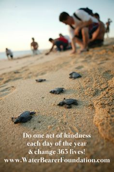 Do one act of kindness each day of the year and change 365 lives! www.WaterBearerFoundation.com We raise money bring awareness for our oceans, sea,marine life and award marine biology scholarships! Inspiration quotes. Love the beach quotes. ocean quotes. sea turtles tortugas , tortuga sea tortoise help turtles