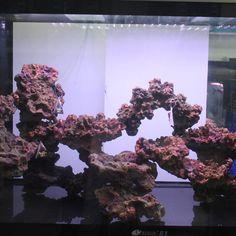 Medium-sized-fish-tank-aquarium-landscaping-plants-decorative-rockery-stone-background-of-font-b-live-b.jpg (800×800)