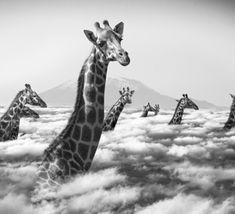 IMAGES : Hakuna Matata ou la vraie vie des animaux, de Thomas Subtil, à l'honneur aux Echappées Belles, et en partenariat avec Compétence Photo.