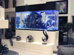 This saltwater aquarium setup guide tells you everything you need to know about setting up a saltwater fish tank or Marine Reef Aquarium. Aquarium Design, Saltwater Aquarium Setup, Saltwater Fish Tanks, Aquarium Stand, Home Aquarium, Marine Aquarium, Aquarium Fish Tank, Tropical Fish Tanks, Aquarium Ideas