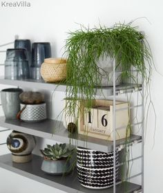 Plants x Kitchen – Kreavilla