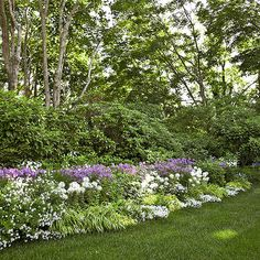 Perfect Perennial BorderRepetition of color and texture move the eye along this bountiful border. Phlox,Cleome, and sweet alyssum add brilliant spots of color. Ornamental grasses add soft texture.