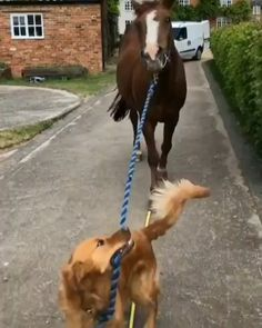 Cute Funny Puppy Videos, Funny Horse Videos, Funny Horses, Cute Funny Dogs, Cute Animal Videos, Cute Funny Animals, Funniest Animal Videos, Baby Animals Pictures, Funny Animal Pictures
