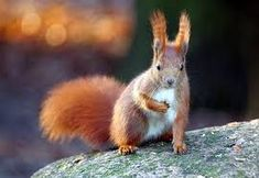 These animals have prettier hair than most people you know, and it's all natural! Chipmunks, Pretty Hairstyles, Squirrels, Animals, Postcards, Beautiful, Google, Swimming, Cute Hairstyles