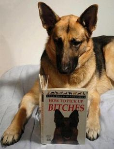 German Shepherd are very smart. Now I know the reason :)
