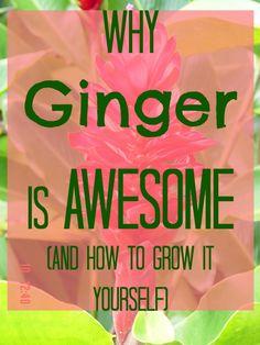 http://onegr.pl/1iB7YqA #ginger #heath #wellness