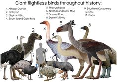 Image result for new zealand moa existing today