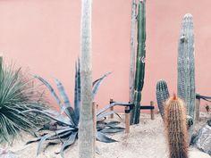 Cacti at Hortus Botanicus Amsterdam