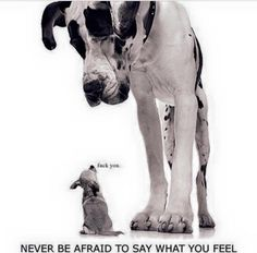Never be afraid to say what you are going to say! #dogs
