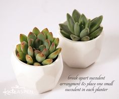 DIY Succulent Place Card Holders | Succulent Wedding Favors | Rustic Decor | Geometric Planter | Kate Aspen | www.kateaspen.com