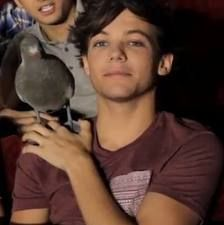 """""""louis and i were outside, then louis saw a pigeon, so he ran to it and screamed """"kevin, is that you?!""""  - zayn malik"""