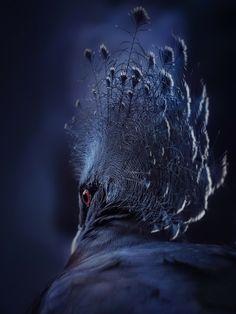 Le sioux ... by eric c. on 500px #bird #animal