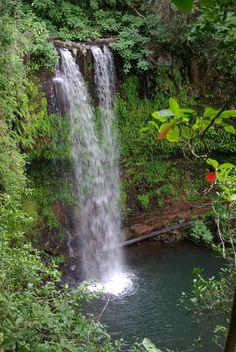 Madagascar, Amber Mountain National Park (by Twilight Tea)