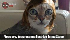 Vous avez tous reconnu Emma Stone... - Be-troll - vidéos humour, actualité insolite