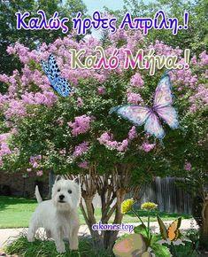 Εικόνες για τον μήνα Απρίλιο.! - eikones top Dogs, Plants, Animals, Wallpapers, Products, Knitting And Crocheting, Animales, Animaux, Pet Dogs