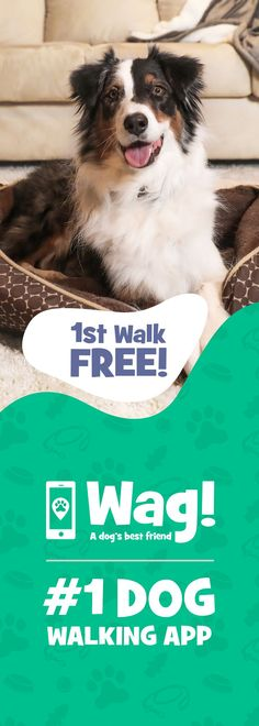 Find the best dog walkers near you! 1st walk FREE ($20 value)! Offer expires soon :)
