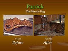 Patrick, The Miracle Dog http://diply.com/trendyjoe/this-dog-was-tossed-in-a-trash-chute-left-/43466