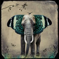 What the healer told me about myself: You are a butterfly crossed with an elephant - love this drawing, awesome to find it! Photo Elephant, Elephant Love, Elephant Art, Elephant Tattoos, Collage Kunst, Collage Art, Illustration Manga, Street Art, Art Plastique
