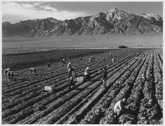 Life at a Japanese internment camp, taken by Ansel Adams