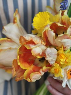 parrot tulips also come in a brighter orange and the yellow flowers around them are daffodils. These flowers with forsythia branches exude spring time garden...