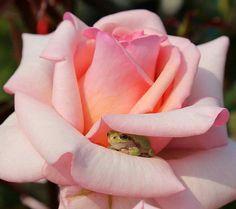 Cute Frog Hideout