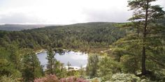 Looking across the Caledonian pine trees at Coire Loch in Glen Affric, Highlands © FC Library