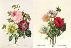 Vintage Botanical prints by Park St...