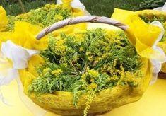 Parsley, Cabbage, Herbs, Vegetables, Plants, Food, Facebook, Essen, Cabbages