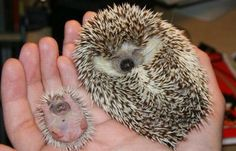 35 Animals Hanging Out With Miniature Versions Of Themselves