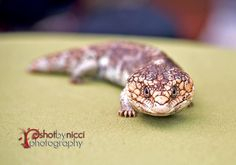 animal photography Real Estate Photography, Glamour Photography, Professional Photography, Animal Photography, Albany Western Australia, My Photos, Animals, Animales, Nature Photography