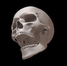 skull human jaw m Skull Reference, Anatomy Reference, Anatomy Sketches, Anatomy Art, Human Skull Anatomy, Anatomy Sculpture, Skull Model, Simple Skull, Skull Illustration
