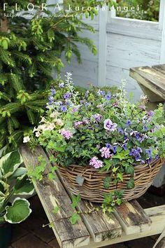 パープルの小花バスケット |フローラのガーデニング・園芸作業日記