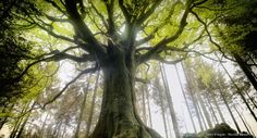 Le roi Arthur et ses légendes restent associés à la forêt de Brocéliande.