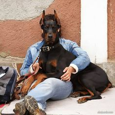 #Doberman (mine sits on me like this as often as she can)