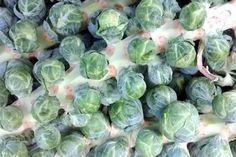 Companion Plants for Brussel Sprouts | eHow